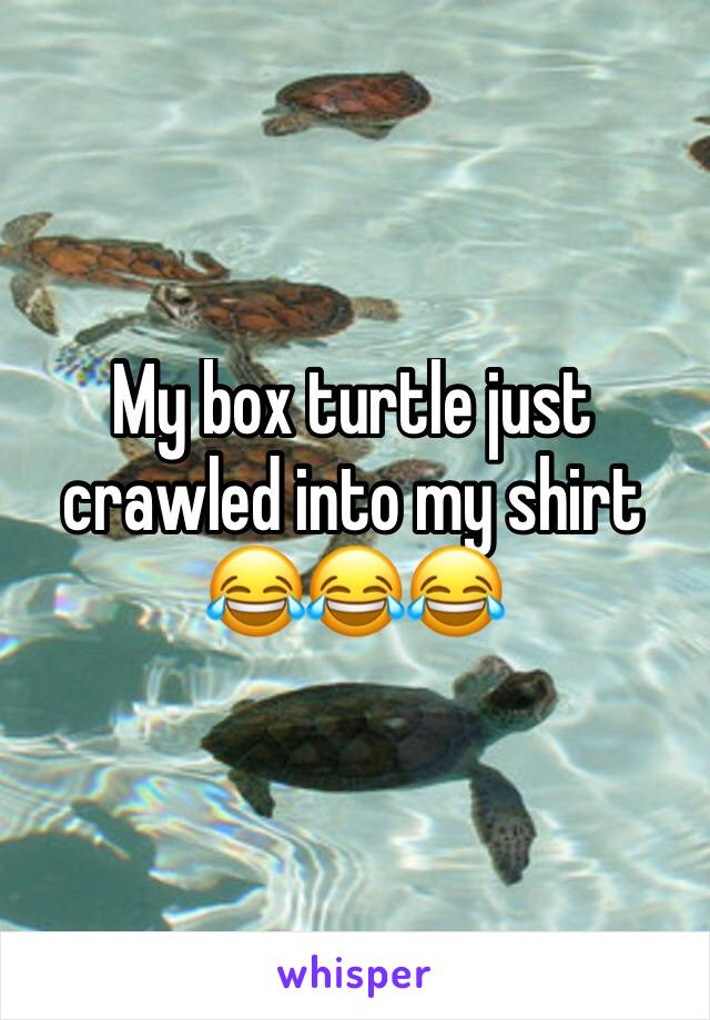 My box turtle just crawled into my shirt 😂😂😂