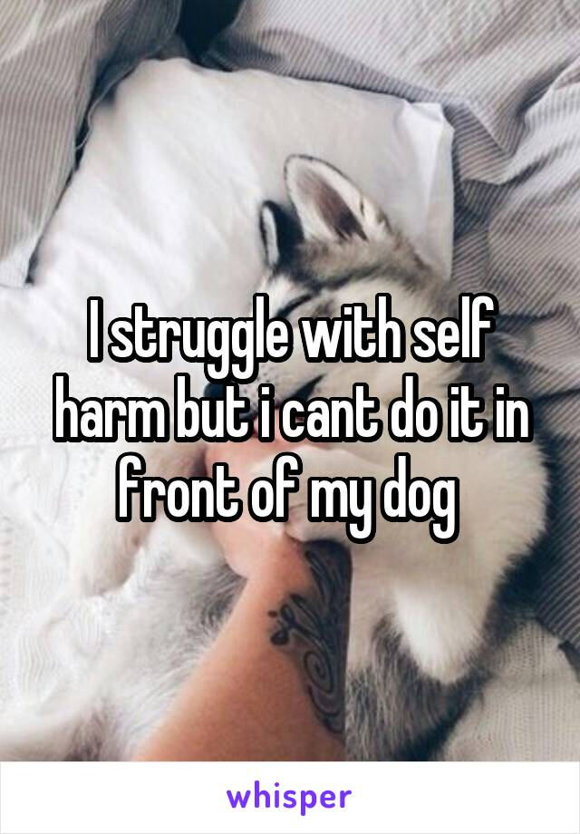 I struggle with self harm but i cant do it in front of my dog