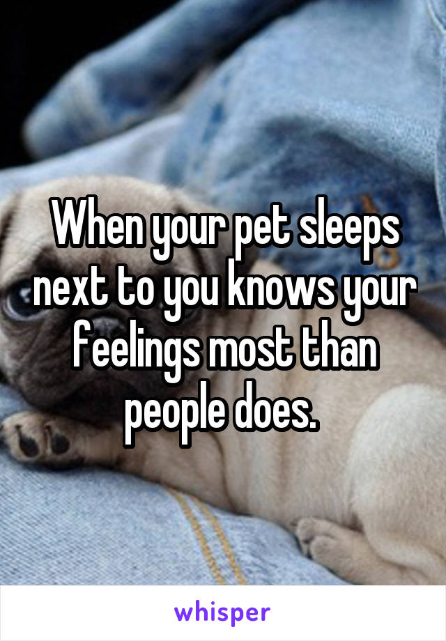 When your pet sleeps next to you knows your feelings most than people does.