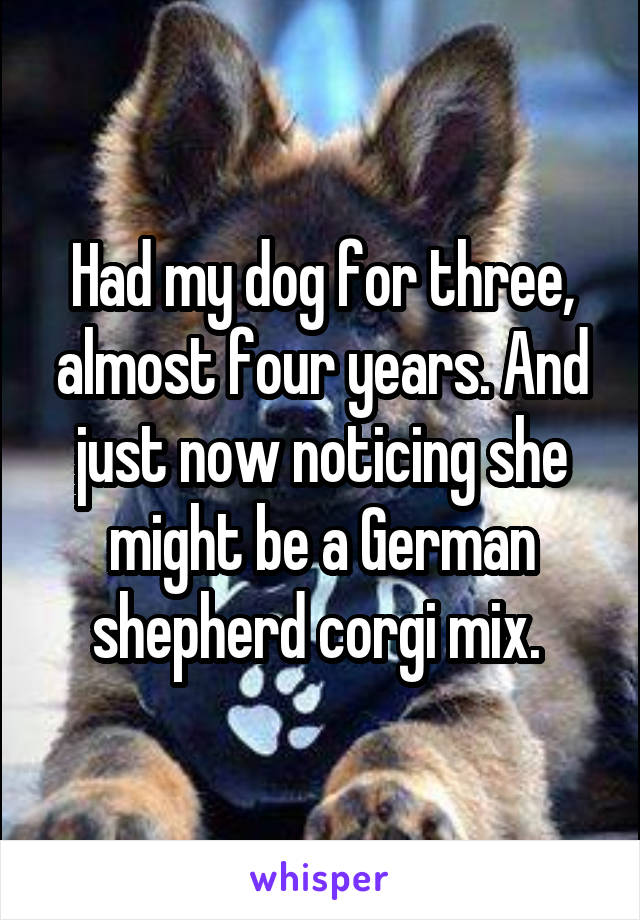 Had my dog for three, almost four years. And just now noticing she might be a German shepherd corgi mix.