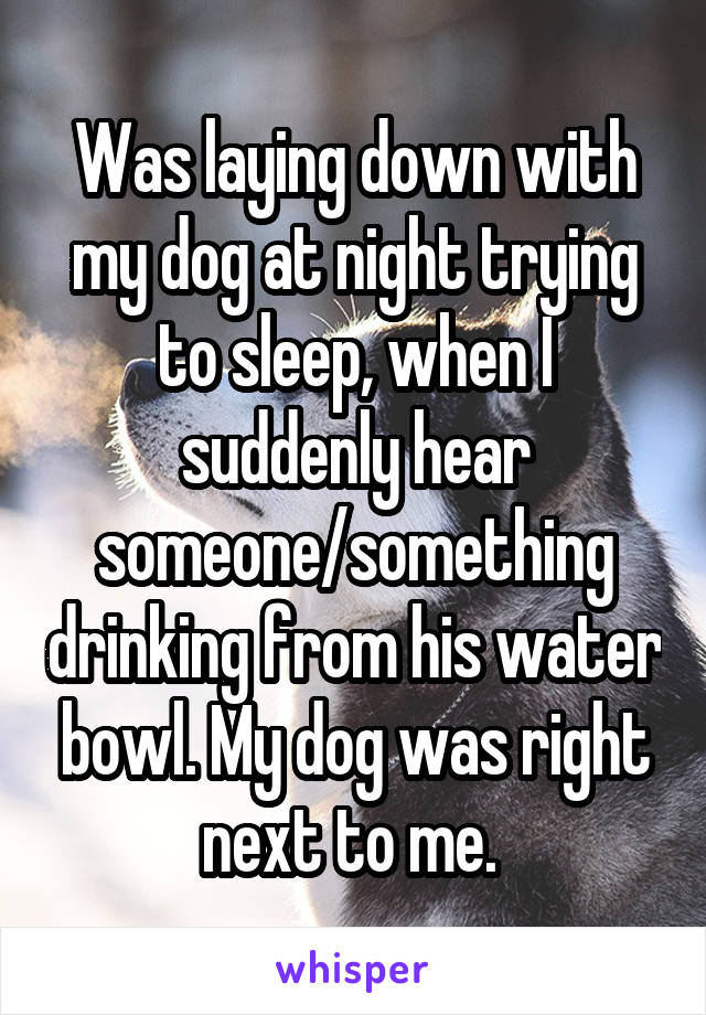 Was laying down with my dog at night trying to sleep, when I suddenly hear someone/something drinking from his water bowl. My dog was right next to me.