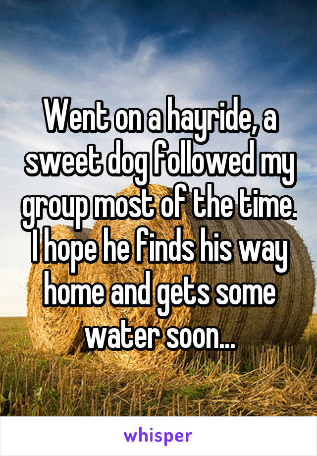 Went on a hayride, a sweet dog followed my group most of the time. I hope he finds his way home and gets some water soon...