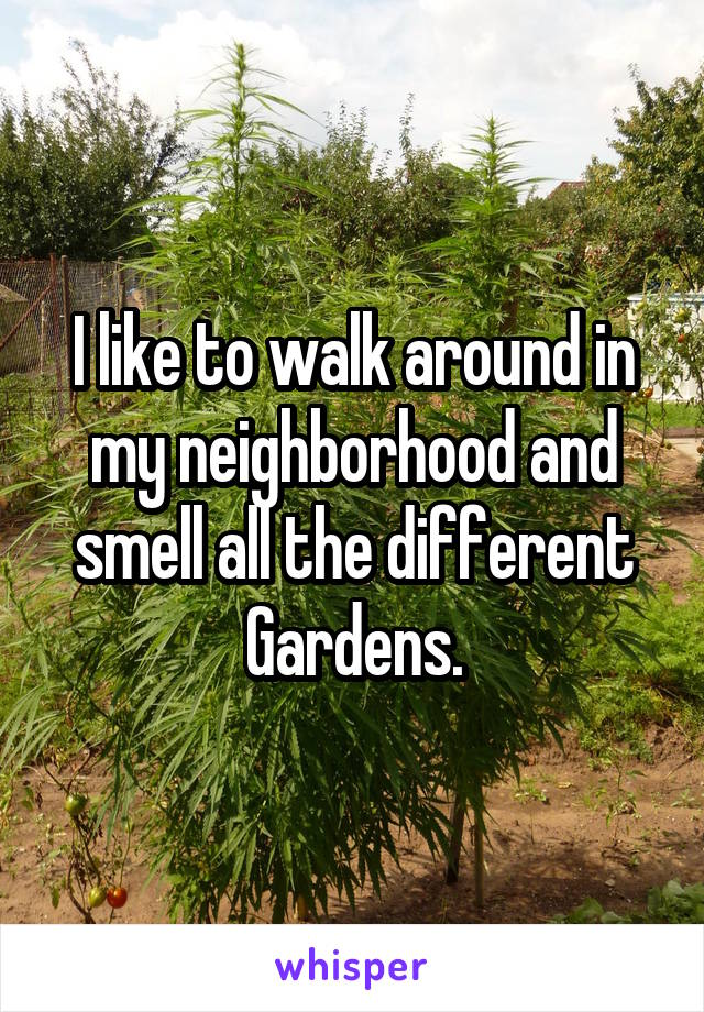 I like to walk around in my neighborhood and smell all the different Gardens.