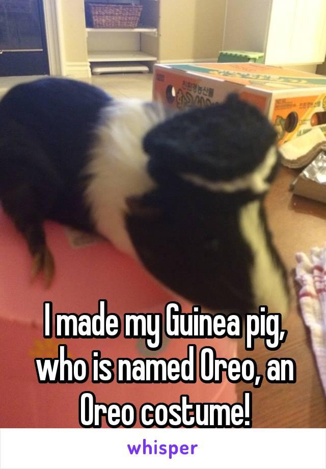 I made my Guinea pig, who is named Oreo, an Oreo costume!