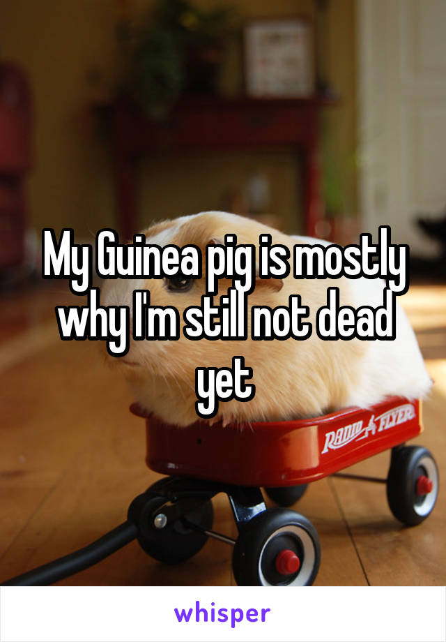 My Guinea pig is mostly why I'm still not dead yet