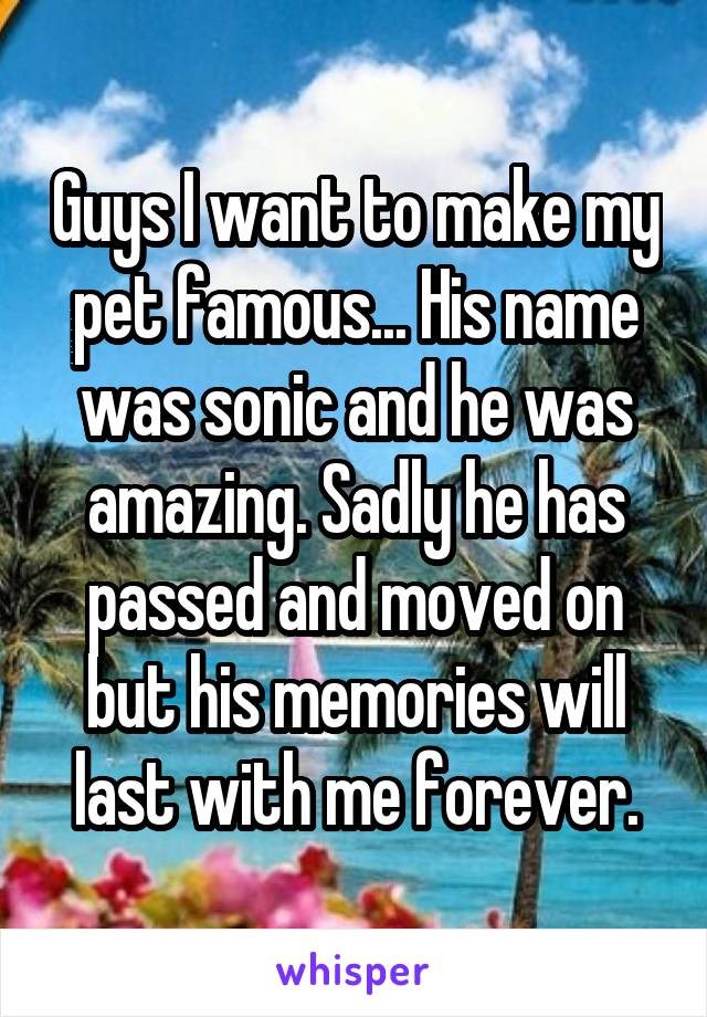 Guys I want to make my pet famous... His name was sonic and he was amazing. Sadly he has passed and moved on but his memories will last with me forever.