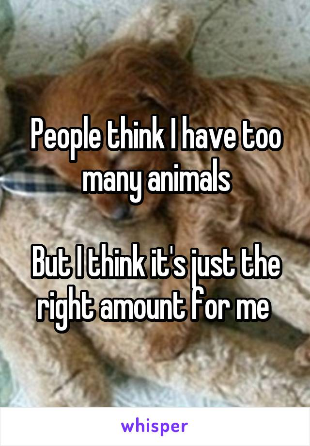People think I have too many animals  But I think it's just the right amount for me