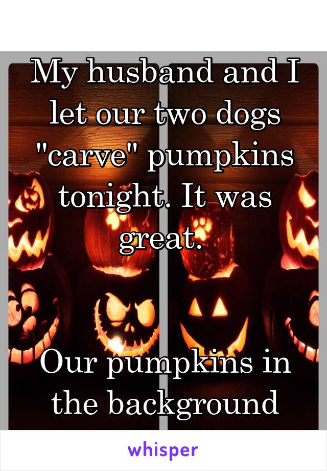 """My husband and I let our two dogs """"carve"""" pumpkins tonight. It was great.    Our pumpkins in the background"""