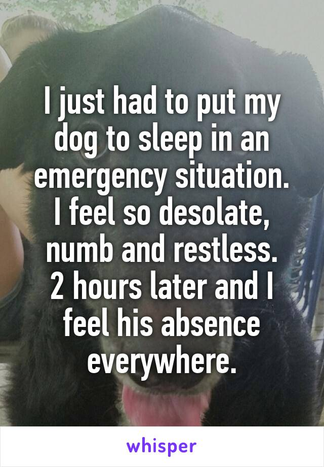 I just had to put my dog to sleep in an emergency situation. I feel so desolate, numb and restless. 2 hours later and I feel his absence everywhere.