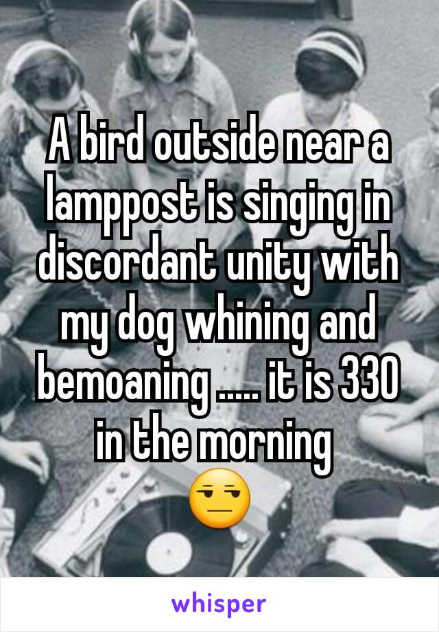 A bird outside near a lamppost is singing in discordant unity with my dog whining and bemoaning ..... it is 330 in the morning  😒