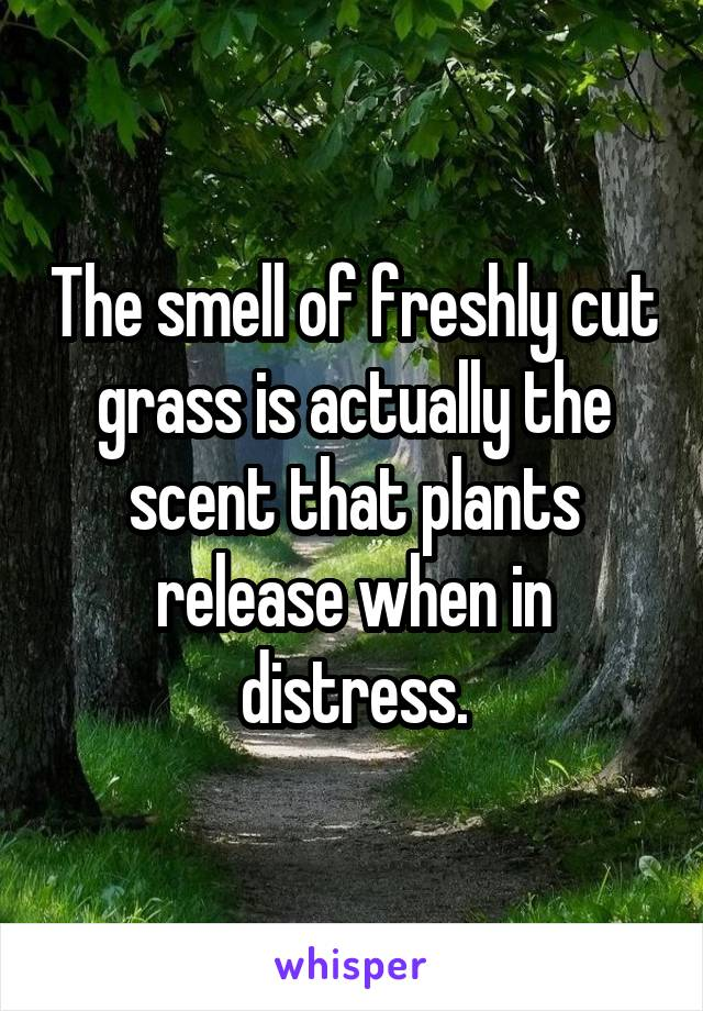 The smell of freshly cut grass is actually the scent that plants release when in distress.