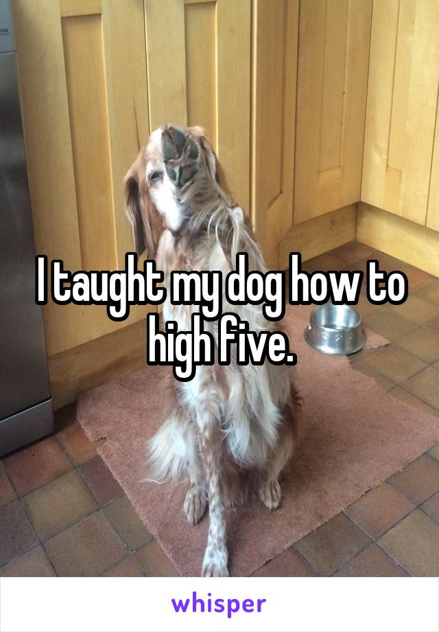 I taught my dog how to high five.