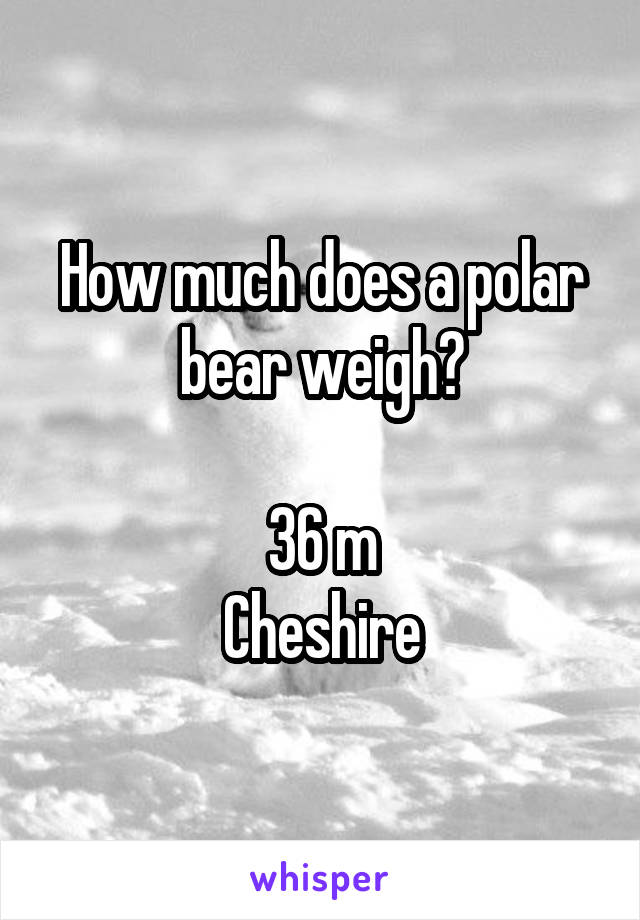 How much does a polar bear weigh?  36 m Cheshire