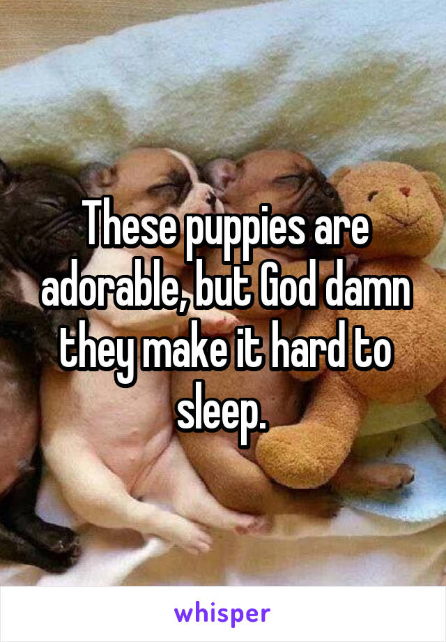 These puppies are adorable, but God damn they make it hard to sleep.