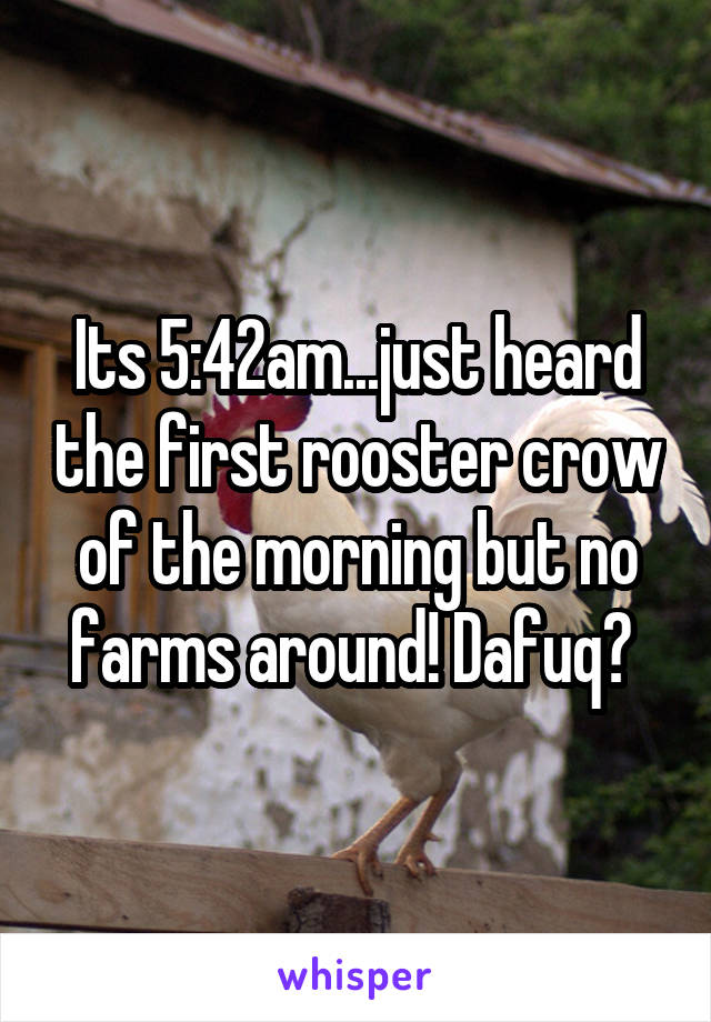 Its 5:42am...just heard the first rooster crow of the morning but no farms around! Dafuq?