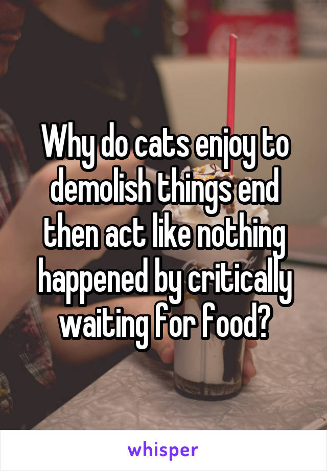 Why do cats enjoy to demolish things end then act like nothing happened by critically waiting for food?
