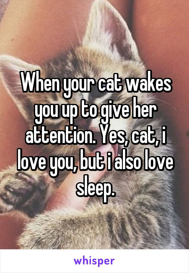 When your cat wakes you up to give her attention. Yes, cat, i love you, but i also love sleep.