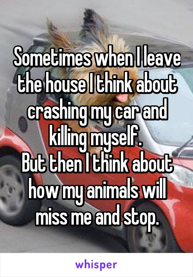 Sometimes when I leave the house I think about crashing my car and killing myself.  But then I think about how my animals will miss me and stop.
