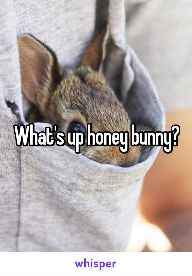 What's up honey bunny?