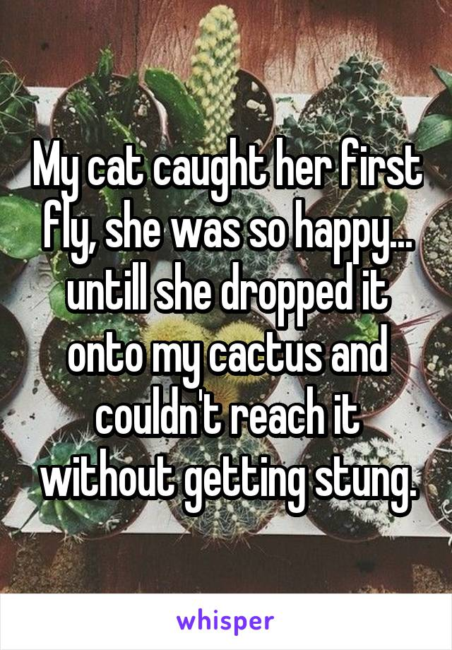 My cat caught her first fly, she was so happy... untill she dropped it onto my cactus and couldn't reach it without getting stung.