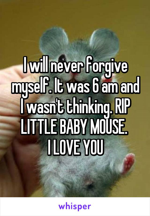 I will never forgive myself. It was 6 am and I wasn't thinking. RIP LITTLE BABY MOUSE.  I LOVE YOU