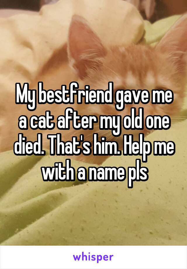My bestfriend gave me a cat after my old one died. That's him. Help me with a name pls