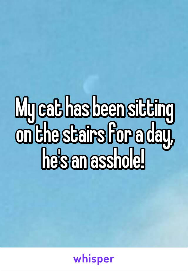 My cat has been sitting on the stairs for a day, he's an asshole!
