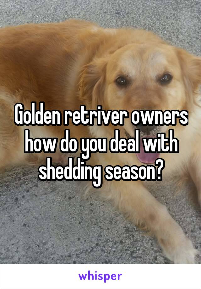 Golden retriver owners how do you deal with shedding season?