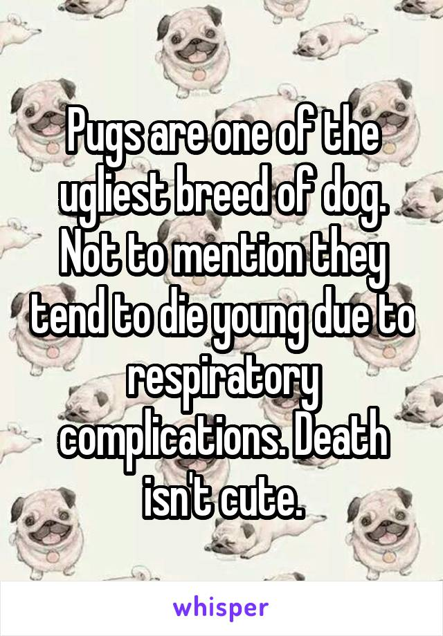 Pugs are one of the ugliest breed of dog. Not to mention they tend to die young due to respiratory complications. Death isn't cute.