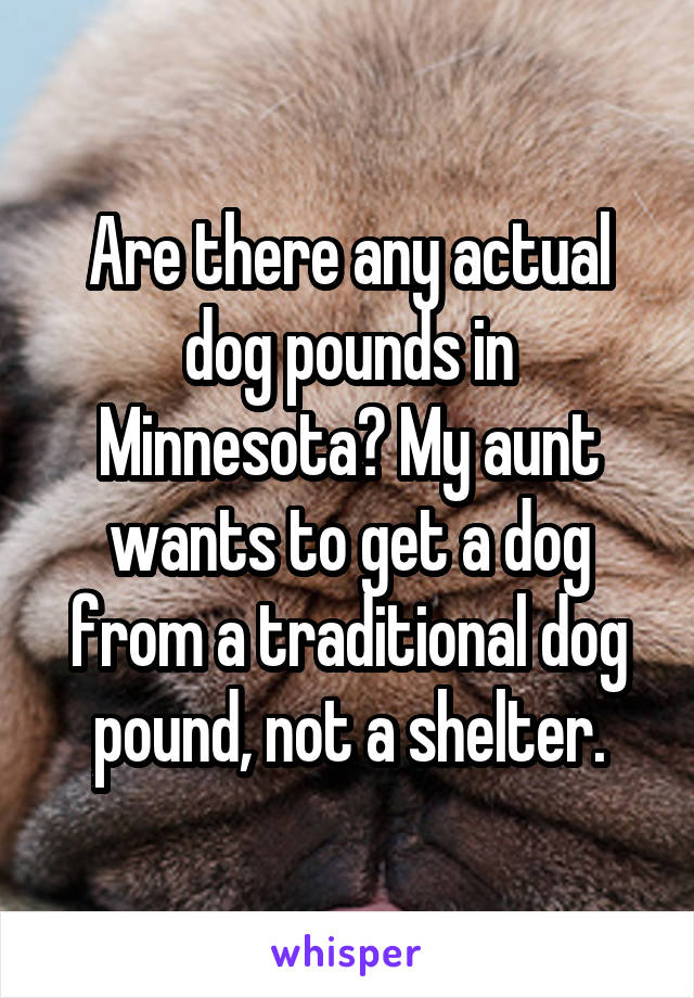 Are there any actual dog pounds in Minnesota? My aunt wants to get a dog from a traditional dog pound, not a shelter.