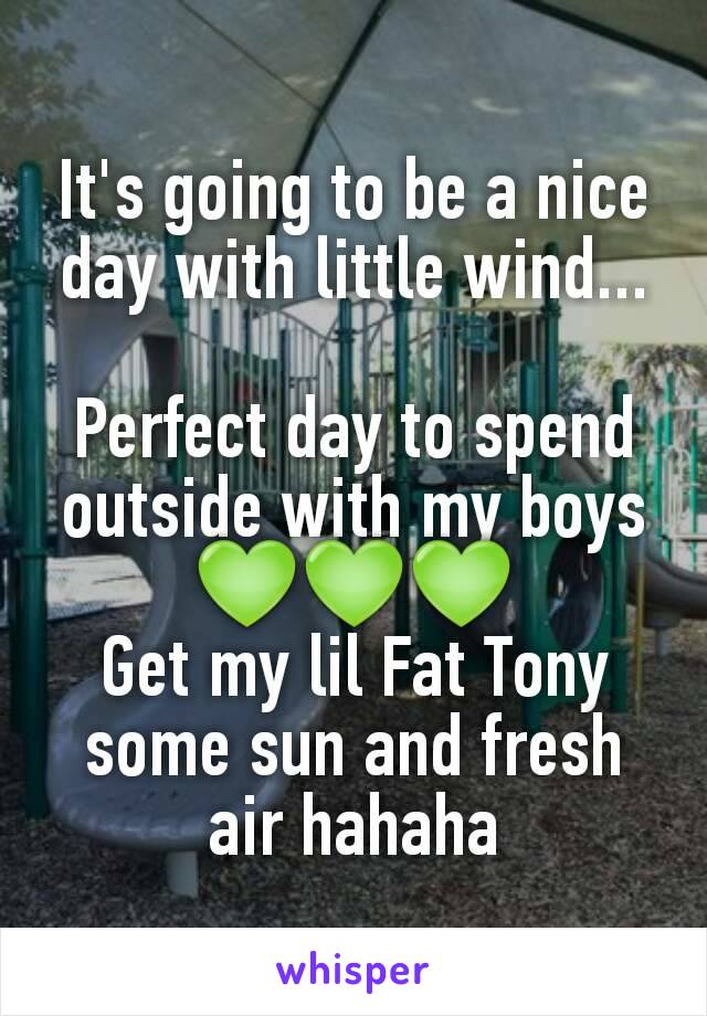 It's going to be a nice day with little wind...  Perfect day to spend outside with my boys 💚💚💚 Get my lil Fat Tony some sun and fresh air hahaha