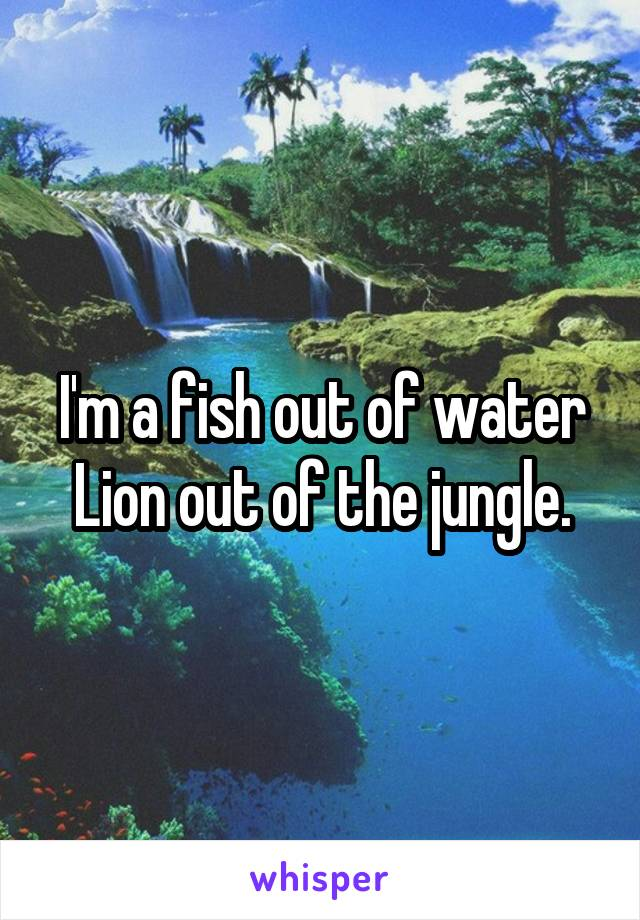 I'm a fish out of water Lion out of the jungle.