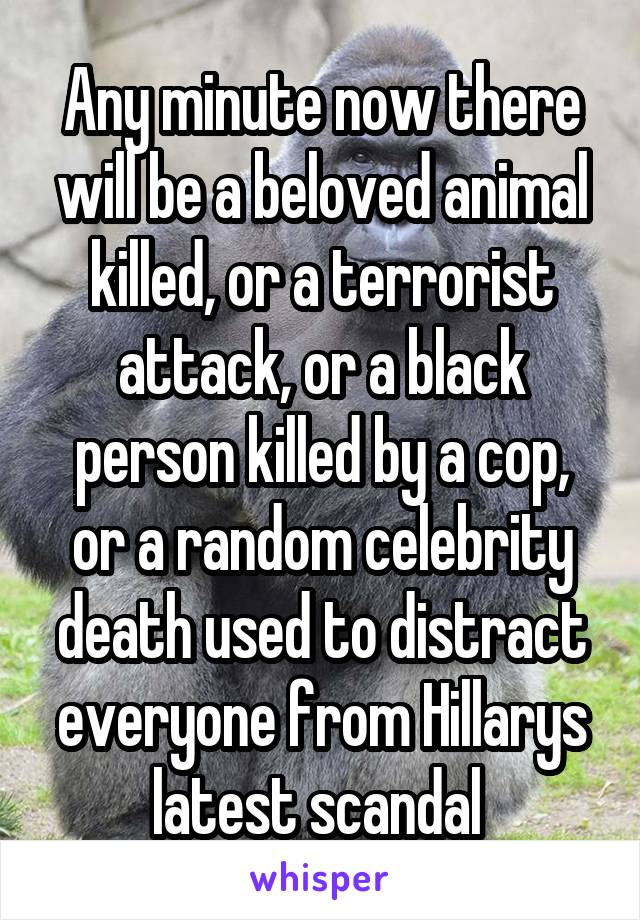 Any minute now there will be a beloved animal killed, or a terrorist attack, or a black person killed by a cop, or a random celebrity death used to distract everyone from Hillarys latest scandal