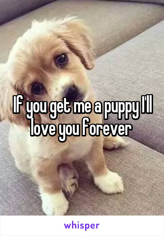 If you get me a puppy I'll love you forever