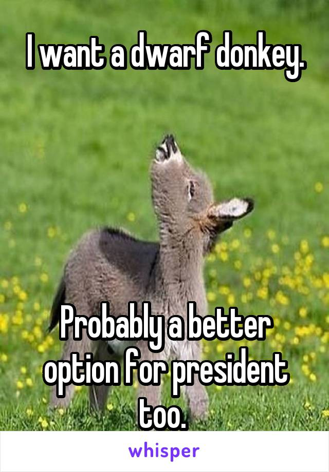 I want a dwarf donkey.      Probably a better option for president too.