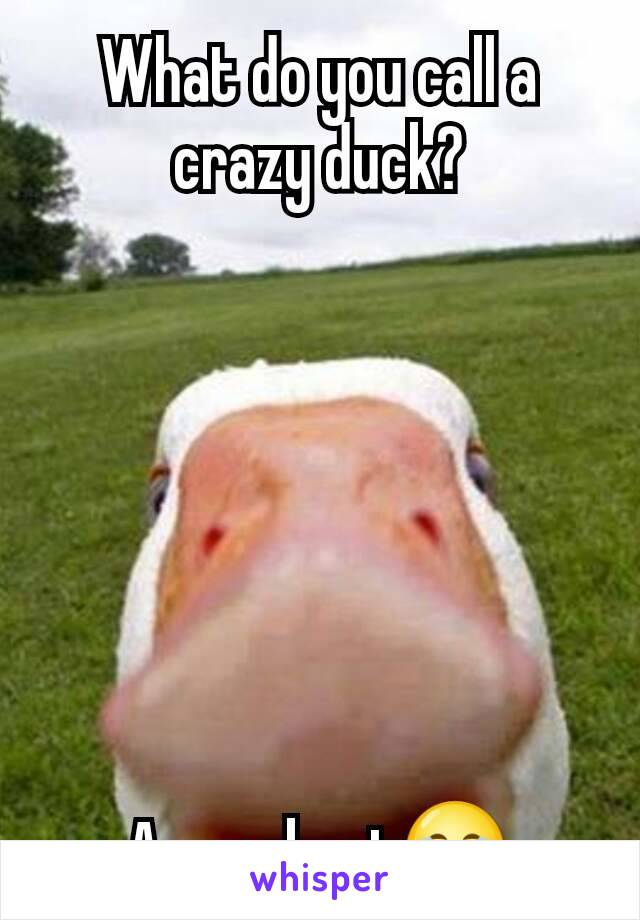 What do you call a crazy duck?        A quackpot😂