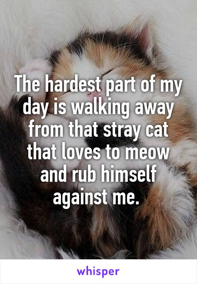 The hardest part of my day is walking away from that stray cat that loves to meow and rub himself against me.