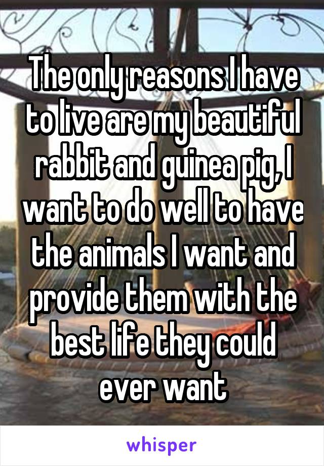 The only reasons I have to live are my beautiful rabbit and guinea pig, I want to do well to have the animals I want and provide them with the best life they could ever want
