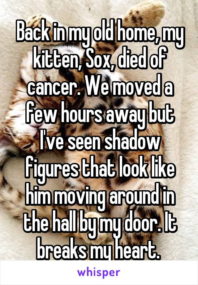 Back in my old home, my kitten, Sox, died of cancer. We moved a few hours away but I've seen shadow figures that look like him moving around in the hall by my door. It breaks my heart.
