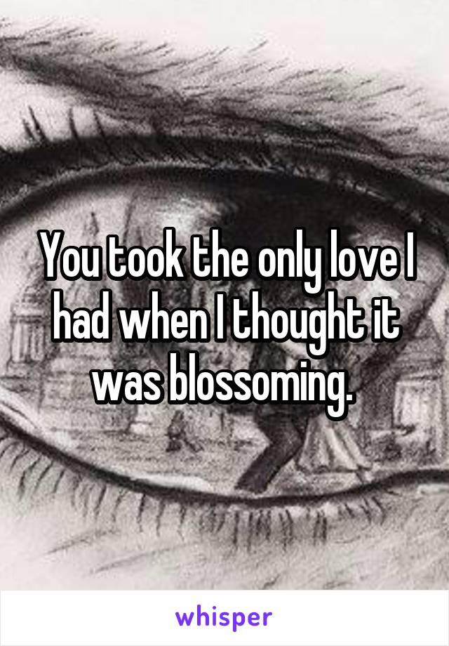 You took the only love I had when I thought it was blossoming.