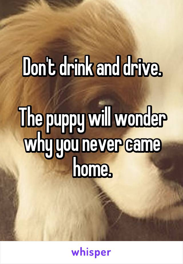 Don't drink and drive.  The puppy will wonder why you never came home.