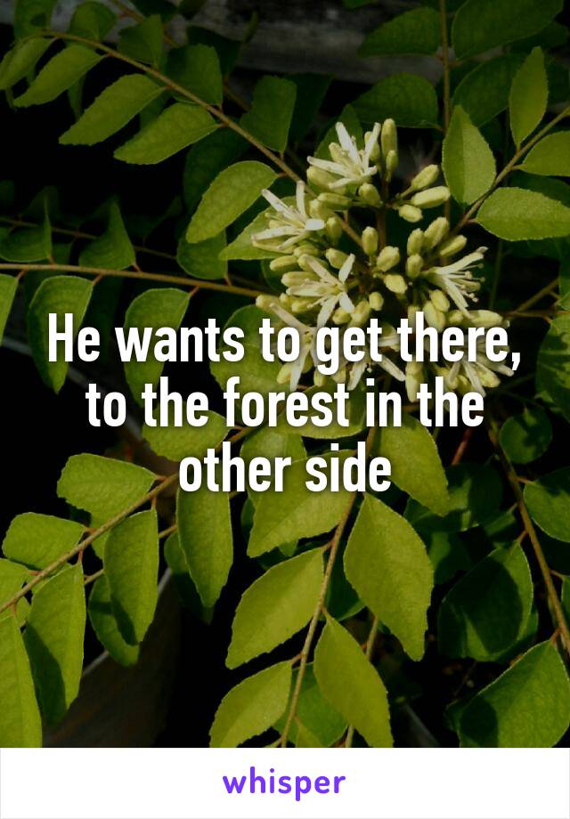 He wants to get there, to the forest in the other side