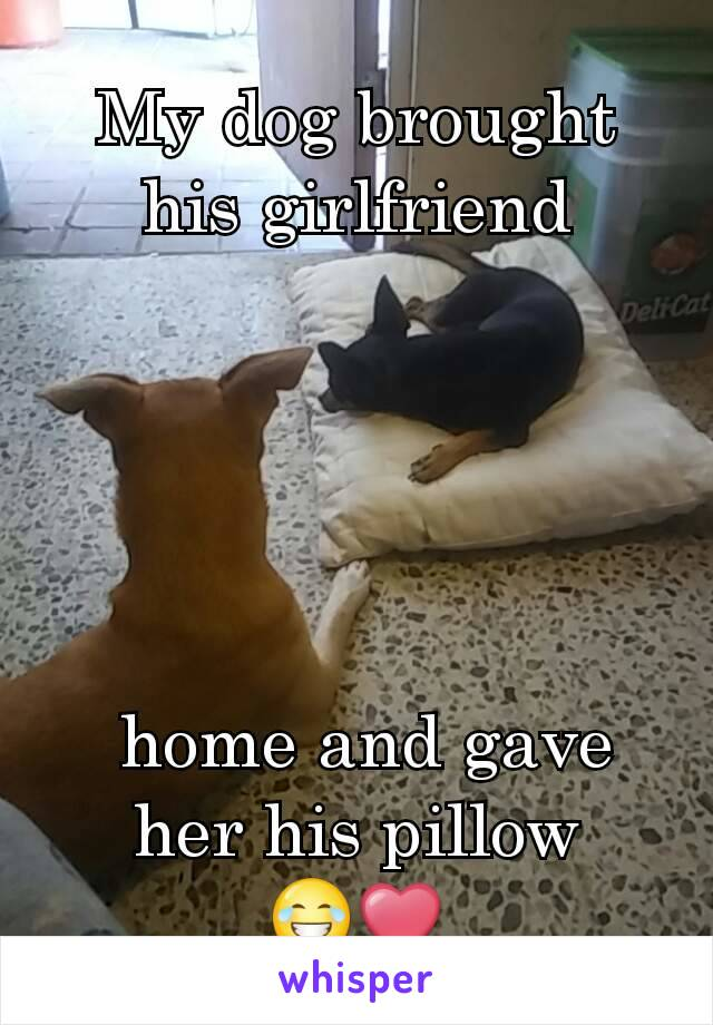 My dog brought his girlfriend       home and gave her his pillow 😂❤
