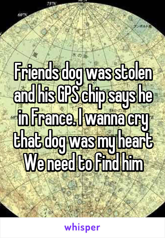 Friends dog was stolen and his GPS chip says he in France. I wanna cry that dog was my heart We need to find him