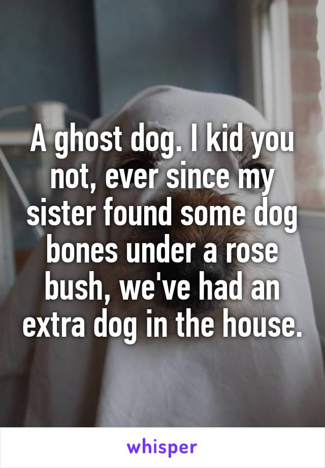 A ghost dog. I kid you not, ever since my sister found some dog bones under a rose bush, we've had an extra dog in the house.