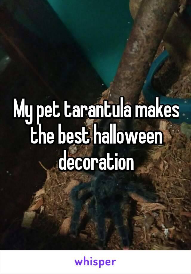 My pet tarantula makes the best halloween decoration