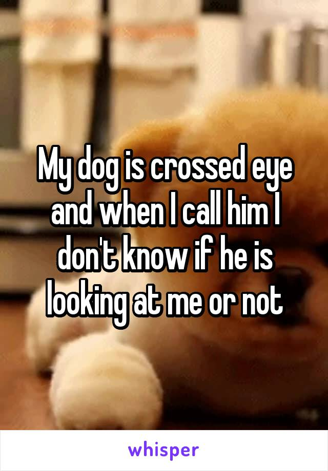 My dog is crossed eye and when I call him I don't know if he is looking at me or not