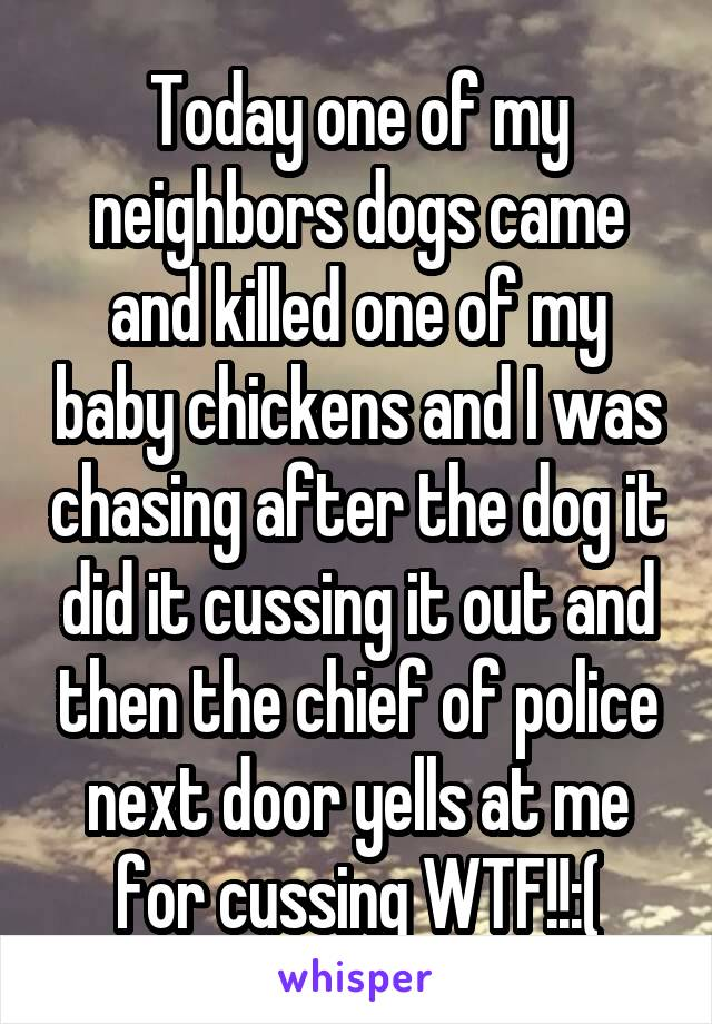 Today one of my neighbors dogs came and killed one of my baby chickens and I was chasing after the dog it did it cussing it out and then the chief of police next door yells at me for cussing WTF!!:(