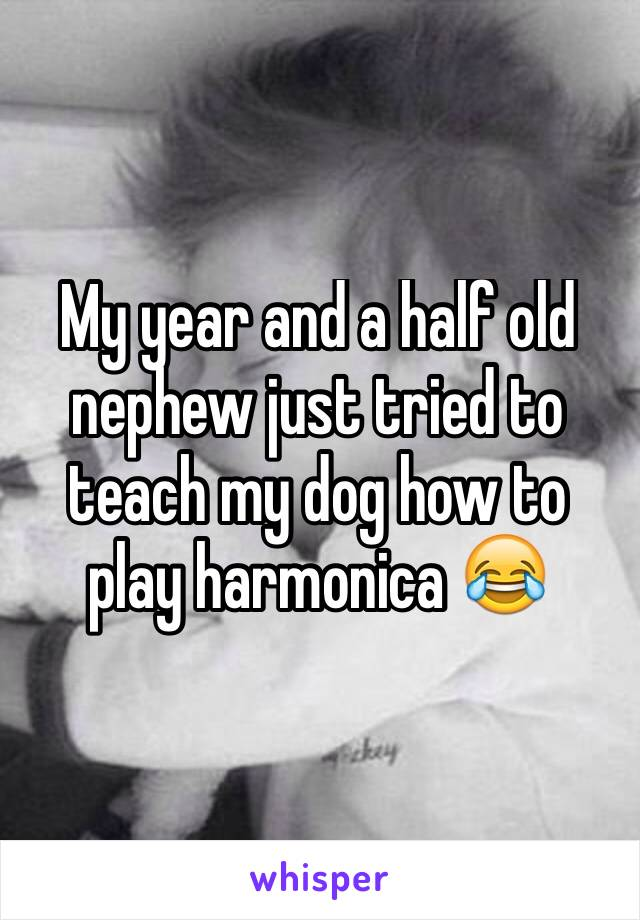My year and a half old nephew just tried to teach my dog how to play harmonica 😂
