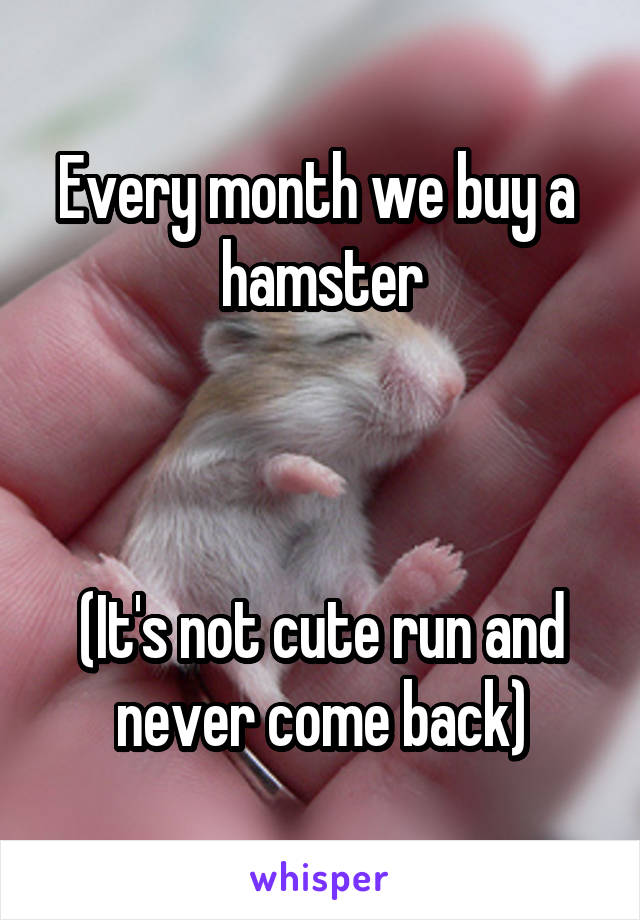 Every month we buy a  hamster    (It's not cute run and never come back)